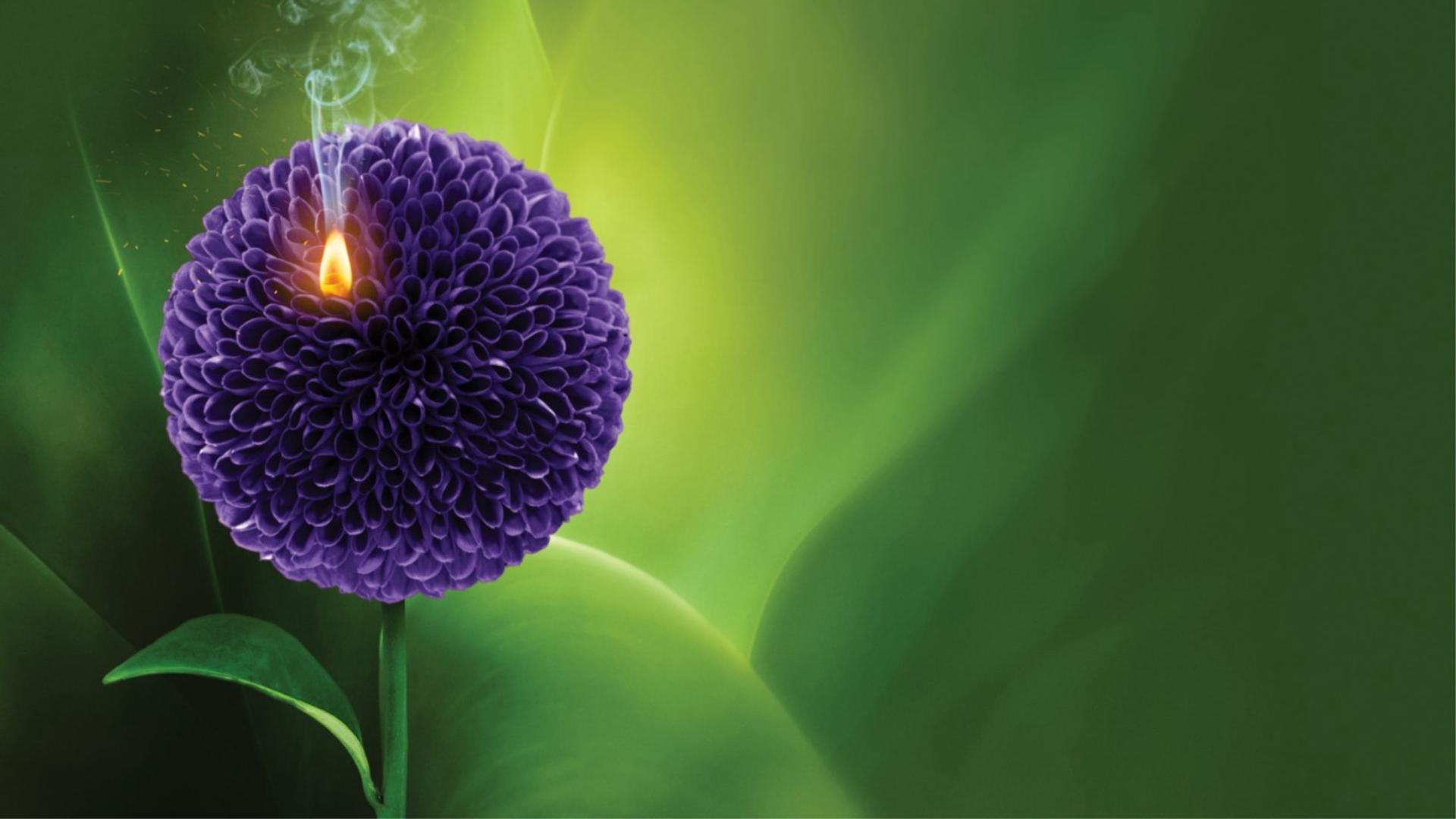Signatera daganat monitoring nyílt nap - ONLINE részvételi lehetőség